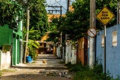 有狗和交通标志的尽头的街道 免版税库存照片