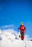 有狗的女孩在冬天山 库存照片