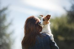 有狗的女孩在她的胳膊 一条小的杰克罗素狗 图库摄影
