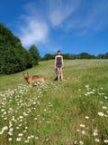 有狗的女孩在春黄菊领域中 免版税图库摄影