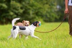 有狗的妇女在草甸 免版税库存图片