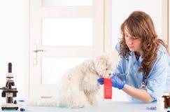 有狗的妇女狩医 免版税库存照片
