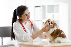 有狗的微笑的兽医,在狩医诊所的桌上 免版税图库摄影