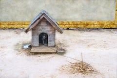 有狗的木狗窝 库存照片