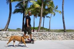 有狗的溜冰板者在南海滩 免版税库存照片