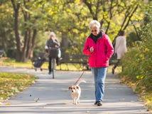有狗的老妇人 免版税库存图片