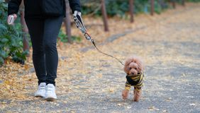 有狗的资深妇女在步行在秋天森林里 库存照片