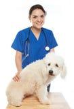 有狗的年轻兽医 库存照片