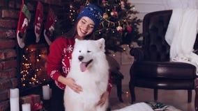 有狗萨莫耶特人的女孩在圣诞树附近 影视素材