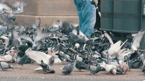 有独轮车和大黑袋子的一名妇女在巴塞罗那喂养城市鸽子 股票视频