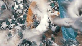有独轮车和大黑袋子的一名妇女在巴塞罗那喂养城市鸽子 影视素材
