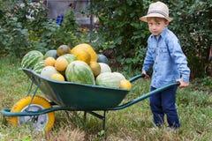 有独轮车的男孩在庭院里 免版税库存图片