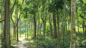 有狭窄的村庄森林运转的路的 免版税库存图片
