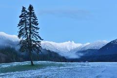 有狮子山的克利夫兰公园,北部Vancouer 图库摄影