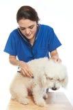 有狮子狗的兽医女孩 免版税库存照片