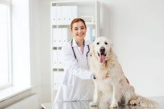 有猎犬狗的愉快的医生在狩医诊所 库存图片