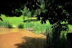 有猫尾巴的池塘 库存照片
