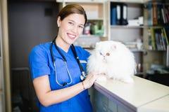 有猫的兽医妇女 库存照片