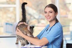 有猫的兽医doc 免版税图库摄影