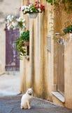 有猫的街道用法语普罗旺斯 免版税图库摄影