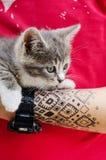 有猫的被刺字的手 免版税库存图片