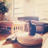 有猫的Boho客厅在阳光下 免版税库存照片