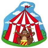 有猴子的马戏场帐篷 库存照片