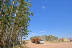 有玉树日志的采伐的卡车本文或木材产业的,乌拉圭,南美 免版税库存照片