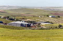 有玉米田和葡萄园的农场 图库摄影