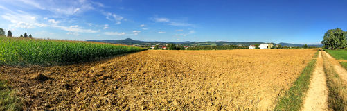 有玉米田的全景 库存图片