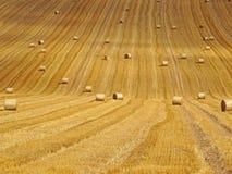 有玉米田的干草捆 免版税库存照片