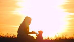 有玩具熊的小女孩在日落 拿着熊玩偶熊的剪影女孩观看日落 概念大梦想 股票录像