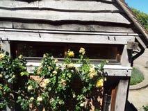 有玫瑰的木棚子 免版税库存照片