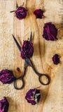 有玫瑰花蕾的剪刀 库存照片