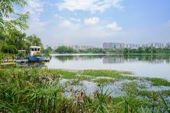 有现代城市的湖边小船在背景中在晴朗的夏天da 免版税图库摄影