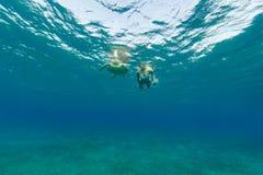 有玳瑁的,水下的摄影潜航的妇女 免版税库存照片