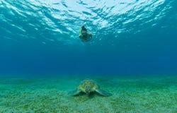 有玳瑁的,水下的摄影潜航的妇女 库存图片