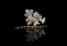 有珊瑚的珍珠镯子 免版税库存图片