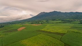 有甘蔗种植园的坎拉翁火山菲律宾前景的 免版税库存照片