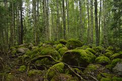 有生苔岩石的神秘的森林 图库摄影