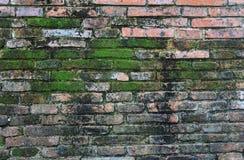 有生长在它外面的青苔的砖墙 免版税库存图片