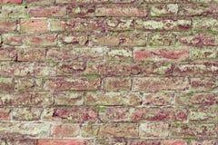 有生长在它外面的青苔的砖墙 免版税图库摄影
