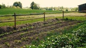 有生长在床上的各种各样的食用植物的私有菜园 影视素材