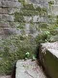 有生长对此的青苔的砖墙 库存图片