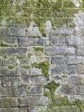 有生长对此的青苔的砖墙 图库摄影