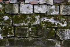 有生长对此的青苔的老砖墙 背景的使用 免版税库存照片