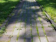 有生长通过它的绿草的石路 库存照片