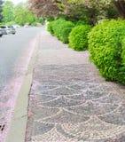 有用下落的花瓣盖的佐仓树的城市街道 免版税库存图片