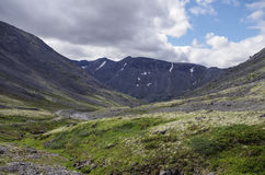 有用地衣和岩石的山寒带草原盖的青苔, Hibi 免版税库存图片