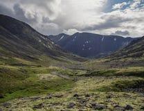 有用地衣和岩石的山寒带草原盖的青苔, Hibi 库存图片